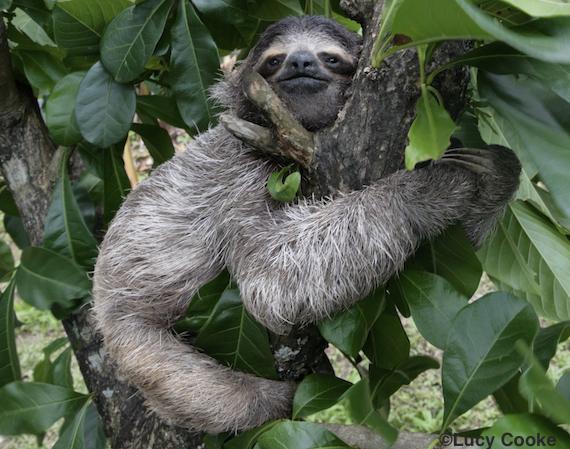 2014-10-29-slothhug.jpg