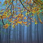 2014-10-30-autumn.JPG