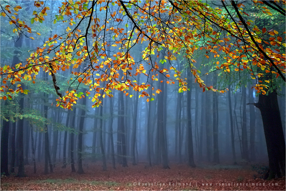 2014-10-30-autumn_forest.jpg.JPG