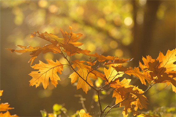 2014-10-30-autumn_light.jpg