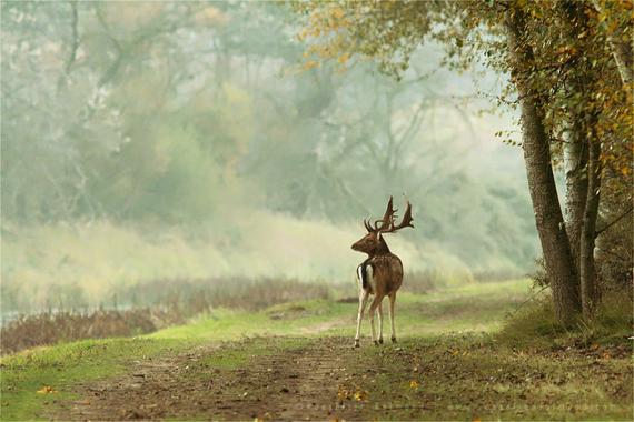 2014-10-30-fallow_deer.JPG