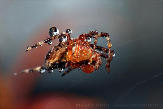 2014-10-30-spider_dew.jpg