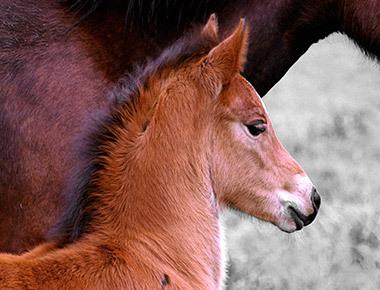 2014-10-31-Horses09_preview.jpg