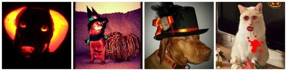 2014-11-03-Collage1.jpg