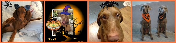 2014-11-03-Collage3.jpg