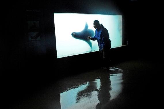 A New New York Aquarium Huffpost