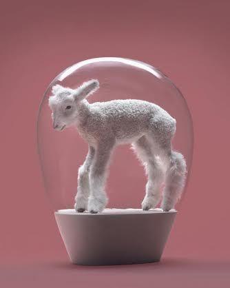 2014-11-04-lamby2014.jpg