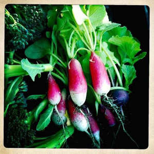 Friends of Alemany Farm (FOAF), The Greenhouse Project