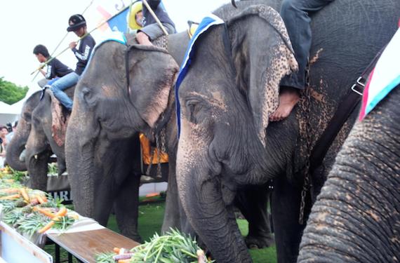 2014-11-05-elephanteats.png