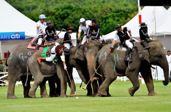 2014-11-05-elephantpolo.png