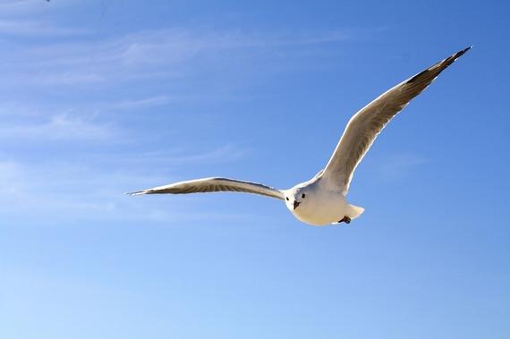 2014-11-06-seagull.jpg