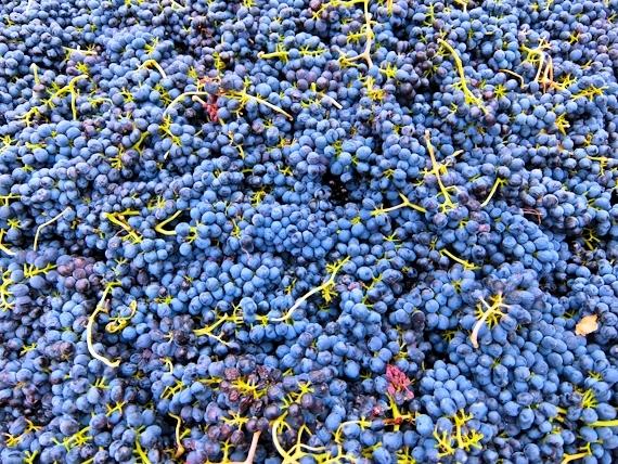 2014-11-07-Grapes.jpg
