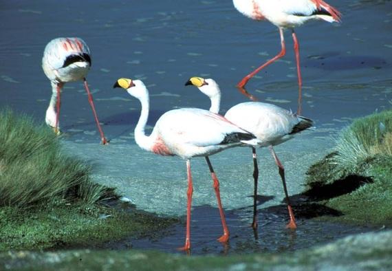 2014-11-08-flamingo2LagunacoloradaOmarRocha.jpg