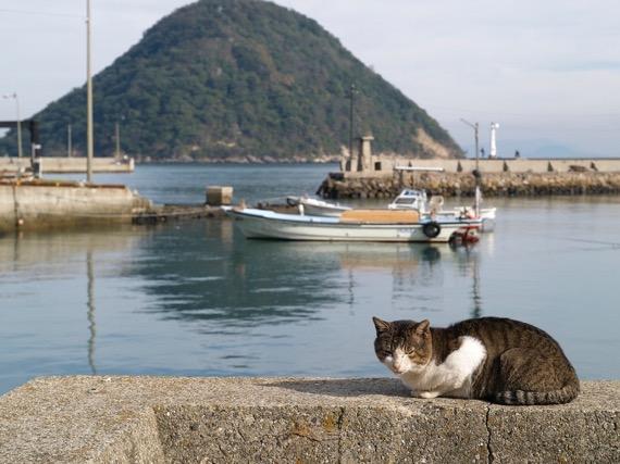 sanagijima-cats01