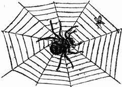 2014-11-10-spiderandfly.jpg