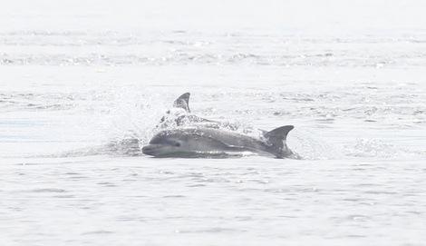 2014-11-12-dolphinMarkSimmondsHSI.jpg