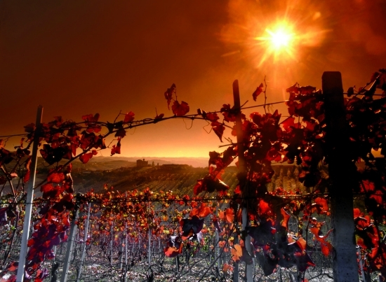 2014-11-13-008_paesaggio_tramonto_grinzane.jpg