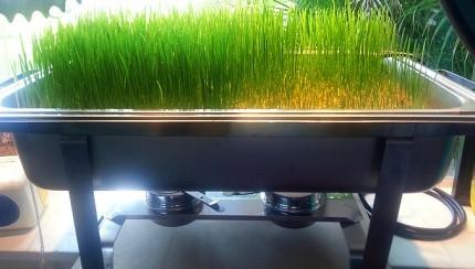 2014-11-13-PowerHouseGrowersHydroponicgardeningWheatgrasssystemUrbanAgriculture.jpg