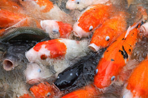 2014-11-16-crowdedfish.jpg