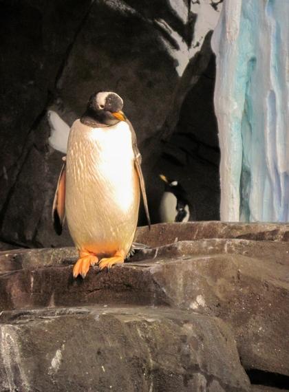 2014-11-17-Penguinsbirdcloseup.jpg