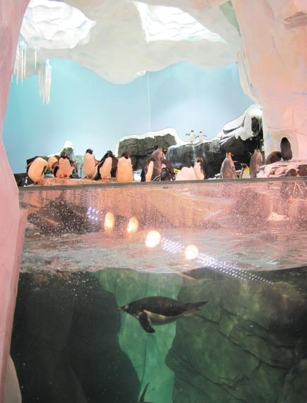 2014-11-17-Penguinsbirdunderwater.jpg