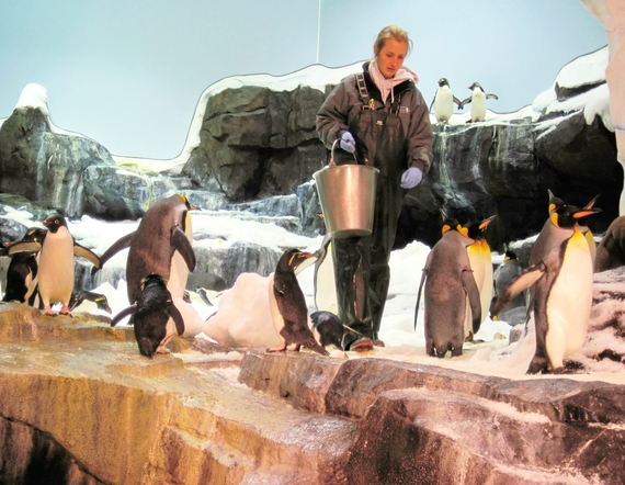 2014-11-17-Penguinsfeedingtime.jpg