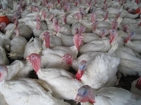 2014-11-17-TurkeysSoniaFaruqi.JPG