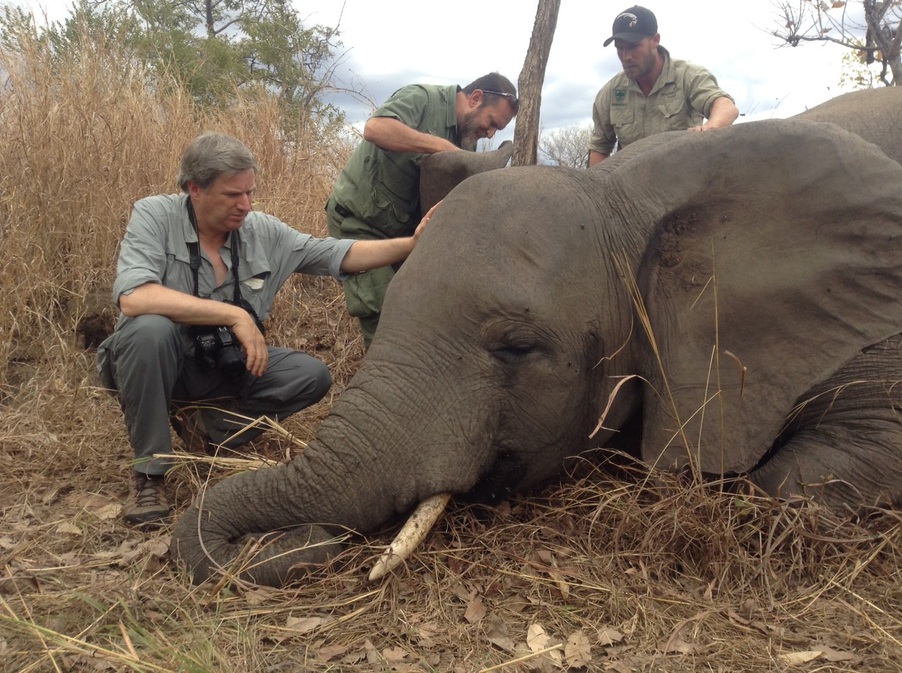 Elephants And Other Wildlife Rely On The World S Protected
