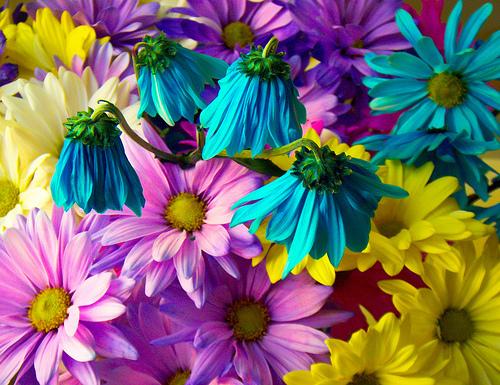 2014-11-17-shrinkingflowers.jpg