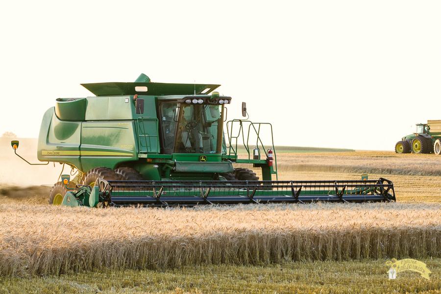 American Wheat Farmer