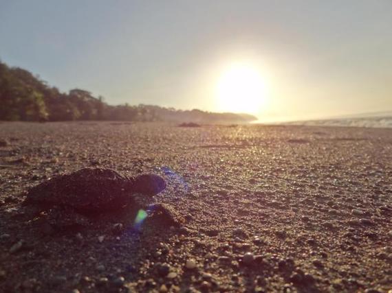 2014-11-18-turtle1232323.jpg