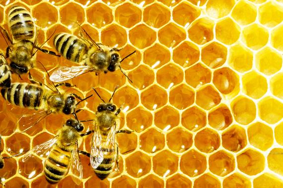 2014-11-19-bees.jpg