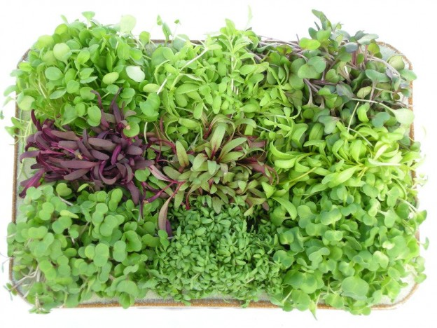 Micro Garden Ideas small garden design a few simple design principles and techniques in a small space can 2014 11 20 Powerhousegrowersmicrogreenshealthbenefitsjpg Micro Wins
