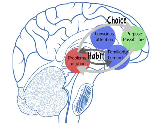 2014-11-23-BrainDiagram.png