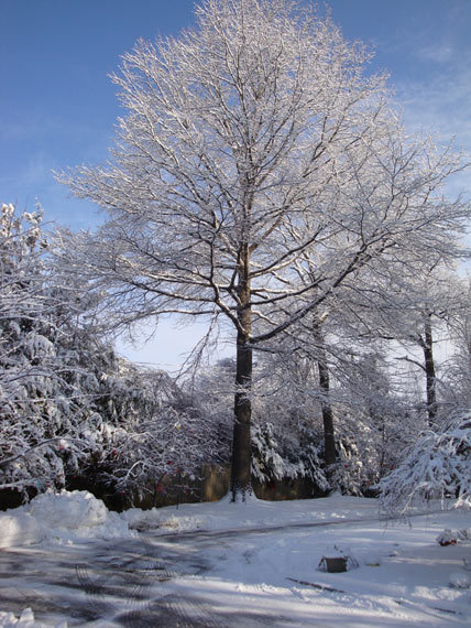 2014-11-23-SnowTree.jpg