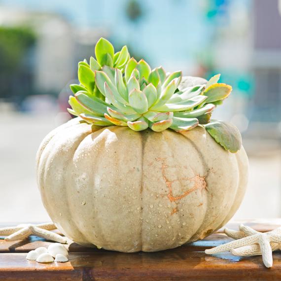2014-11-24-succulentpumpkin.png