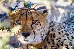 2014-11-25-leopard.jpg