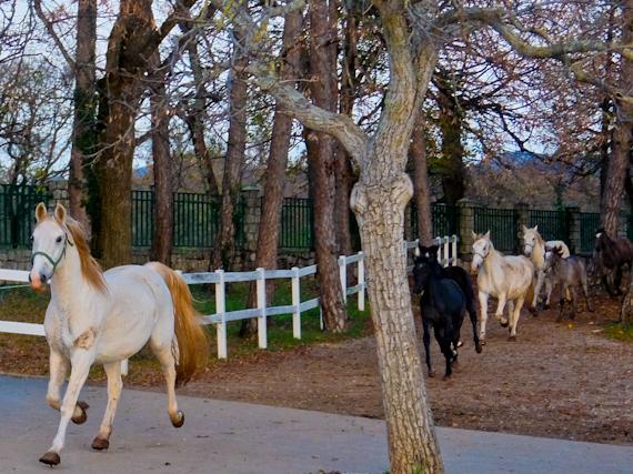 2014-11-26-Horses.jpg