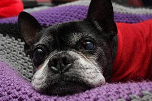 2014-11-26-seniordog.jpg