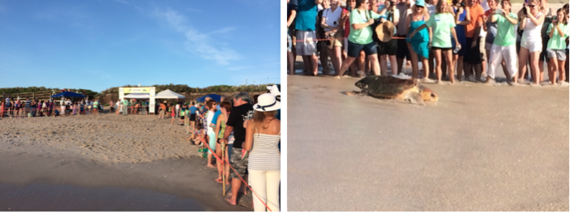 2014-11-28-Turtle2.png