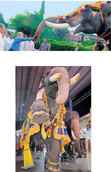 2014-11-30-ElephantOnThreeFeet.jpg