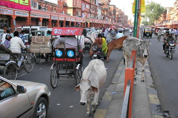 2014-12-01-Jaipurcowscrossingthestreetwithheavytraffic.jpg