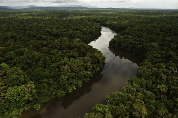 2014-12-02-EssequiboRiverandforestGuyanacPeteOxfordILCP.jpg