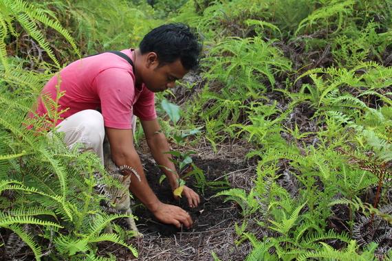 2014-12-02-ForestrestorationCentralKalimantancWorldResourcesInstitute.jpg