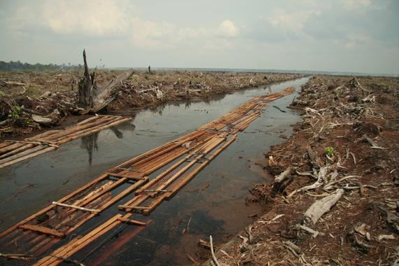 2014-12-02-IndragiriHuluRiauProvinceDeforestationcAidenvironmnet.jpg