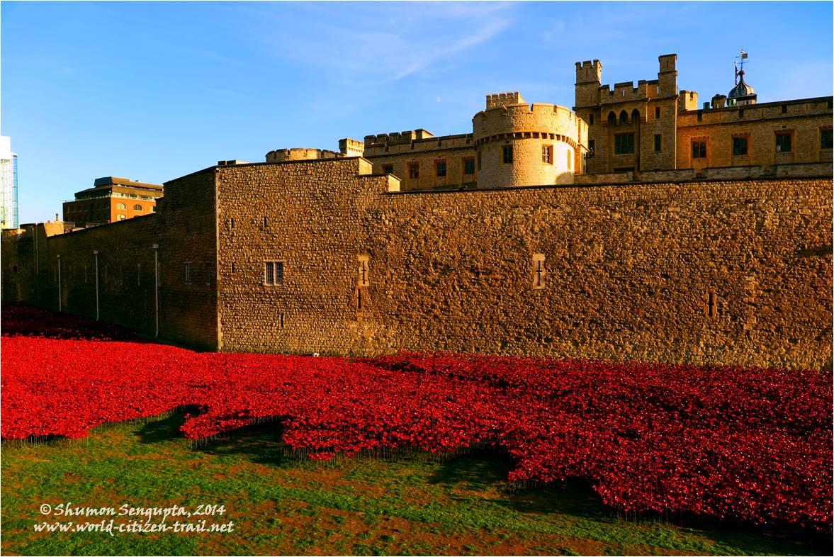 remembrance poppies flower power at the london tower