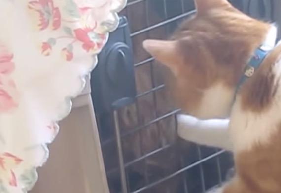 catanddogfriend01