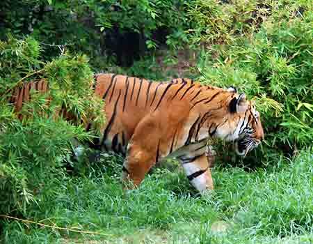 saving land for endangered animals toefl essay