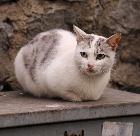 2014-12-08-Cat1.jpg