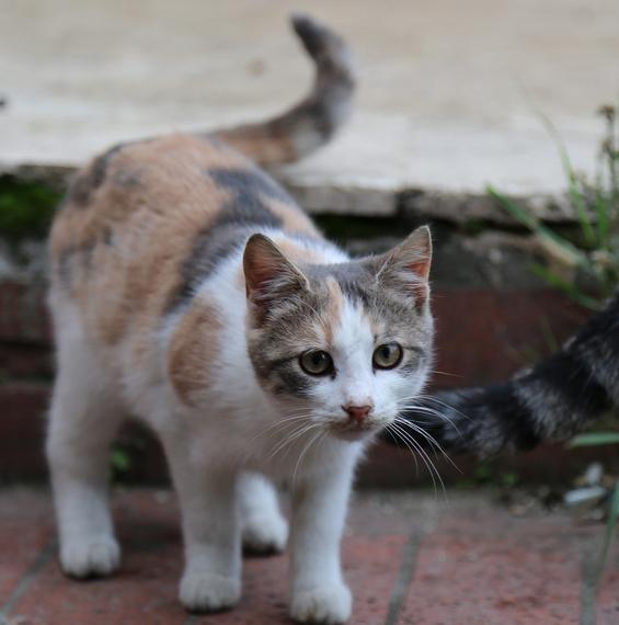 2014-12-08-Cat11.jpg